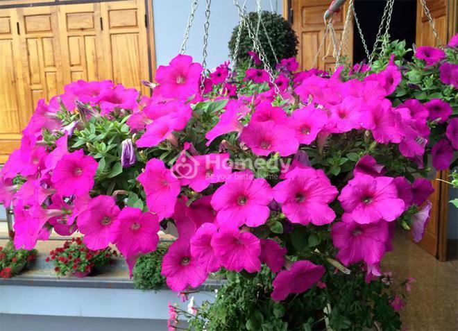 vườn đẹp trên ban công