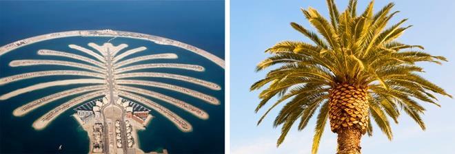 quần đảo cây cọ