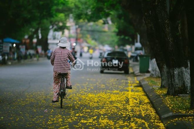 Mùa phượng vàng rực rỡ ở Huế