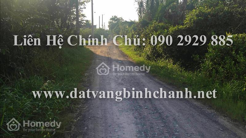 Bán gấp lô đất 505m2 mặt tiền Phong Phú, Bình Chánh, đất đẹp xây kho xưởng, nhà trọ, giá cực rẻ - 2