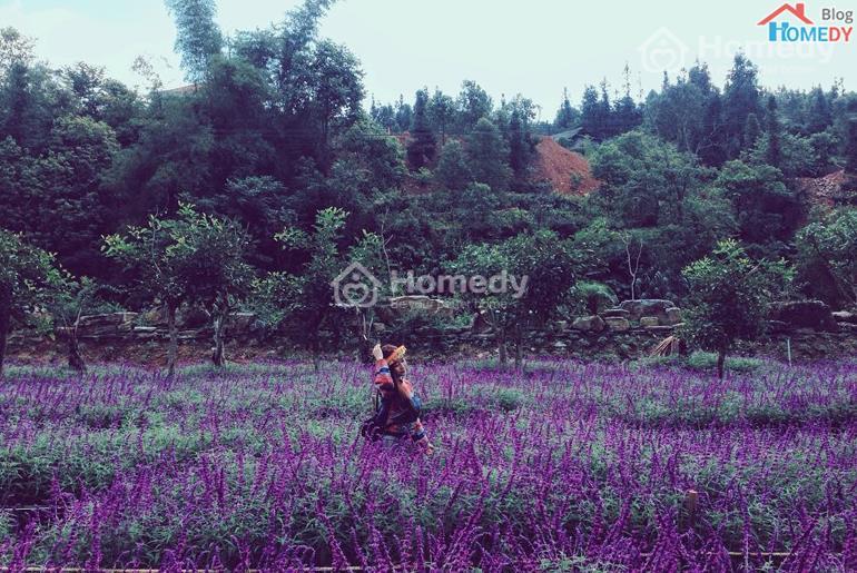 vuon hoa oai huong