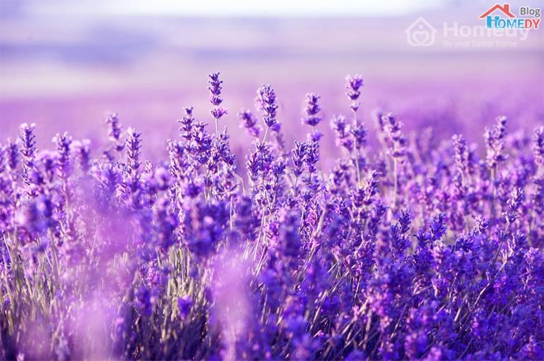 can canh hoa oai huong