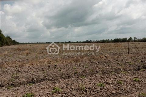 Bán đất ở Bình Hoà Nam, Đức Huệ, Long An (Đất làm trang trại)