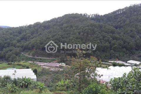 Bán gấp 8.600 mét vuông đất nông nghiệp tại phường 10 TP Đà Lạt