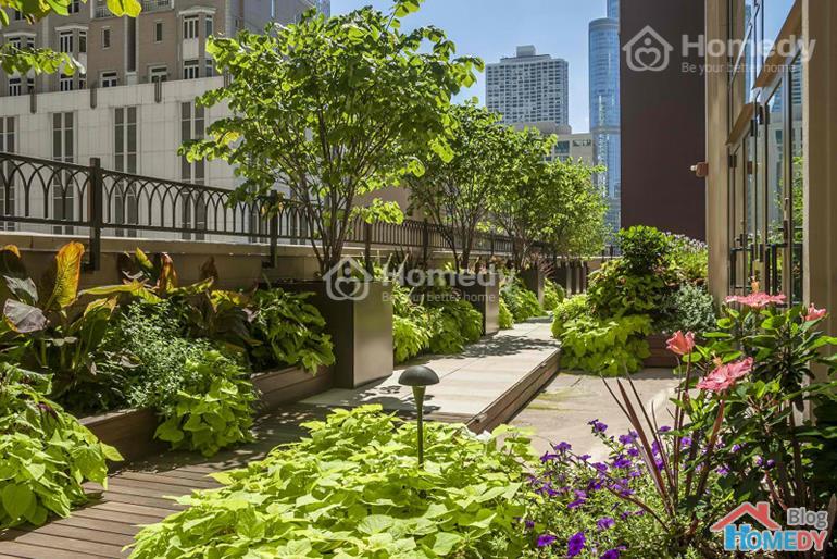 vườn trên sân thượng 2