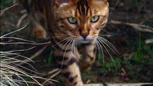 """Ngắm hình ảnh đáng yêu từ """"vua của loài mèo"""" tại Bỉ"""