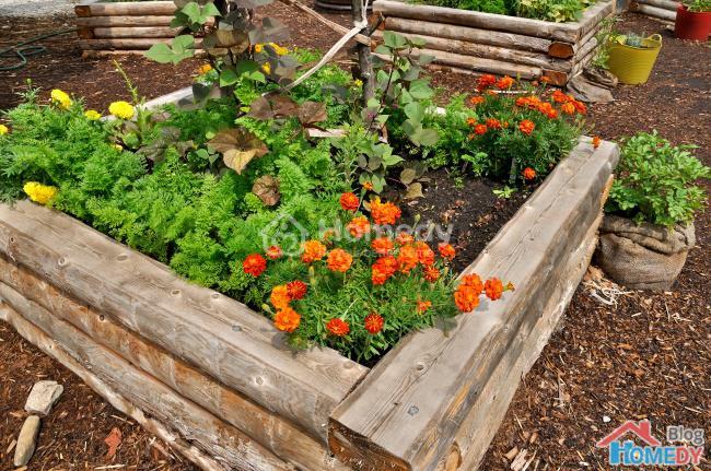 Những ý tưởng tuyệt vời để có khu vườn  trong mơ 1