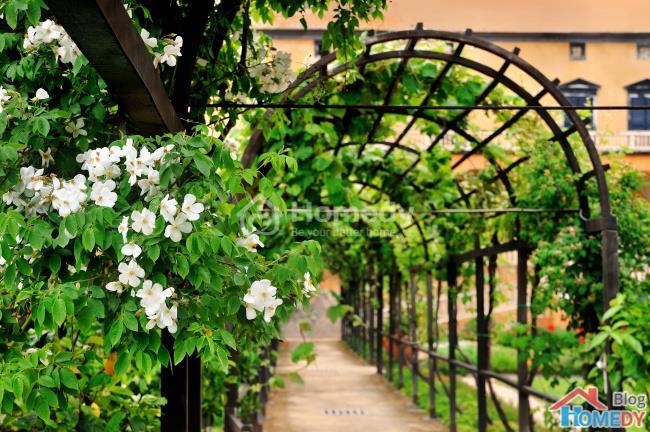 Những ý tưởng tuyệt vời để có khu vườn trong mơ 5