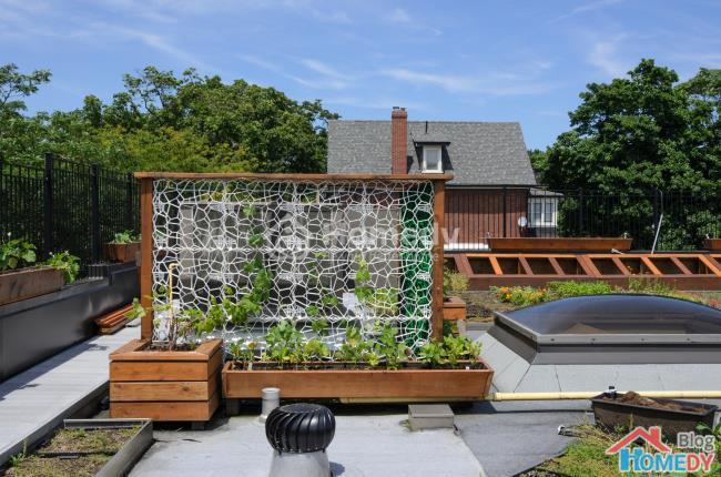 Những ý tưởng tuyệt vời để có khu vườn trong mơ 6