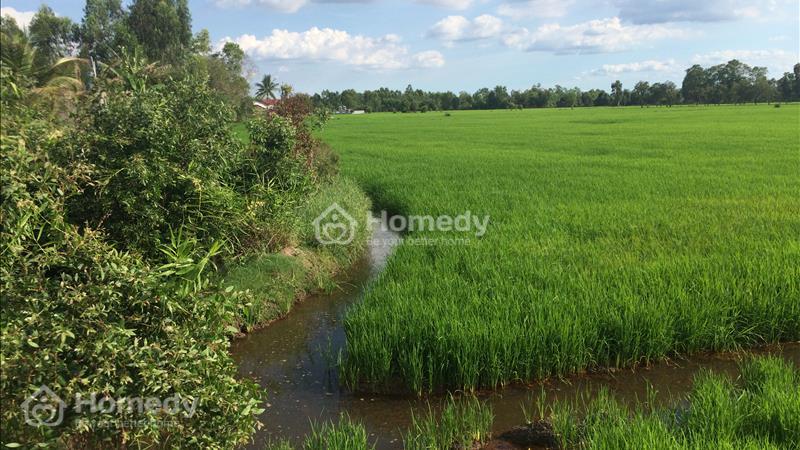 Bán đất mặt tiền TL 830 ấp Hóc Thơm, xã Hòa Khánh Tây, Đức Hòa, Long An - 2