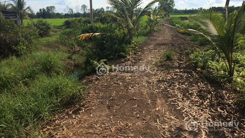 Bán đất mặt tiền TL 830 ấp Hóc Thơm, xã Hòa Khánh Tây, Đức Hòa, Long An - 3