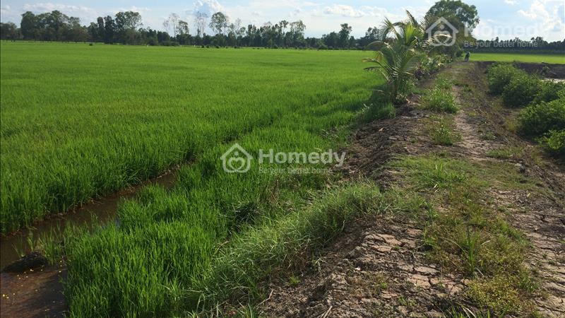 Bán đất mặt tiền TL 830 ấp Hóc Thơm, xã Hòa Khánh Tây, Đức Hòa, Long An - 4