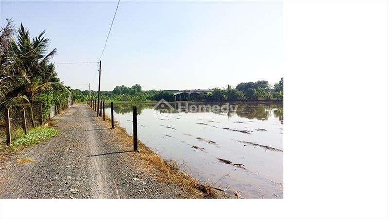 Đất vườn siêu rẻ tại Hưng Long Bình Chánh chỉ 1,5 triệu/m2 - 5