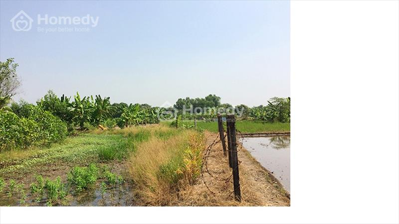 Đất vườn siêu rẻ tại Hưng Long Bình Chánh chỉ 1,5 triệu/m2 - 4