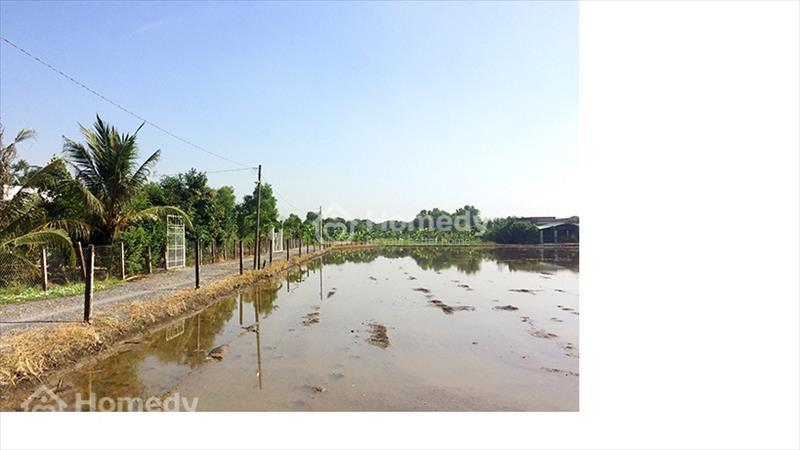 Đất vườn siêu rẻ tại Hưng Long Bình Chánh chỉ 1,5 triệu/m2 - 2