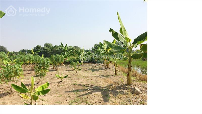 Đất vườn siêu rẻ tại Hưng Long Bình Chánh chỉ 1,5 triệu/m2 - 6