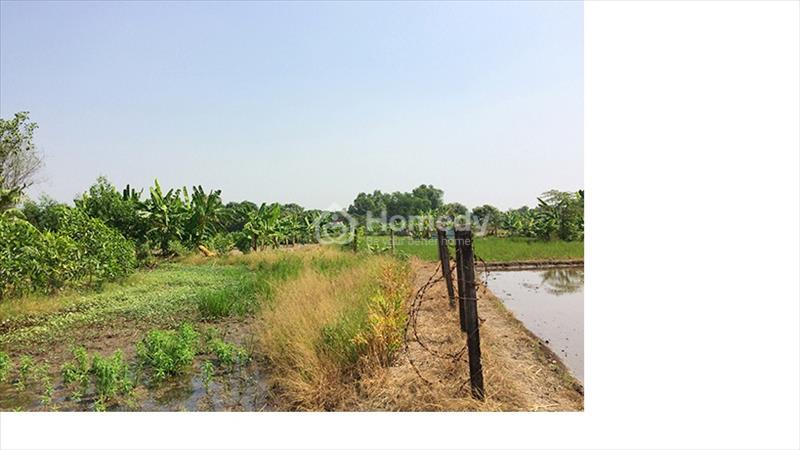 Đất vườn siêu rẻ tại Hưng Long Bình Chánh chỉ 1,5 triệu/m2 - 3