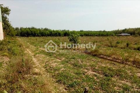 Đất trồng cây lâu năm 3000m2, đường 10m, Phú Xuân, Nhà Bè, 6 triệu/m2