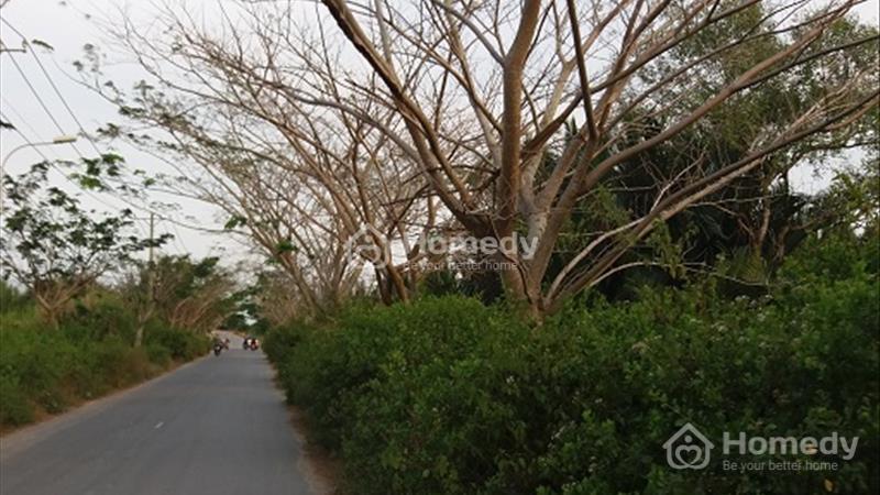 1000m2 đất vườn có ngay 300m2 thổ cư mặt tiền đường Long Thới Nhà Bè giá rẻ - 1