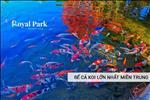 Bể cá Koi lớn nhất miền Trung được thổi bừng sức sống tươi mới cho Royal Park Huế.