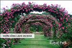 Vườn hồng Lavie En Rose với hàng trăm gốc hồng cổ quý giá.
