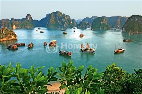 Căn hộ biển Hạ Long khơi gợi nhu cầu hải sản cuối tuần cho cư dân Hà Thành