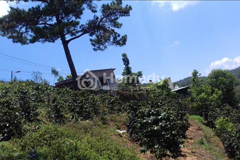 Cần bán gấp lô đất nông nghiệp tại Đà Lạt. Thuận tiện cho việc kinh doanh homestay