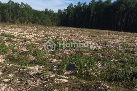 Bán 3.010 m2 đất trồng cây lâu năm, gần trung tâm Nhơn Trạch