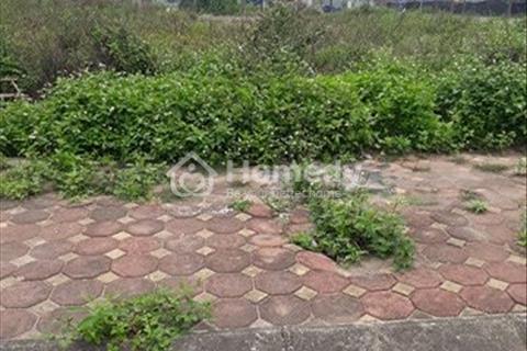Cần bán mảnh đất biệt thự 31 ha Trâu Quỳ. Diện tích 255 m2, giá cực rẻ 20,5 triệu/m2