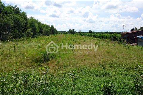 Cho thuê đất nông nghiệp ở kênh Xáng, gần cầu An Hạ, xã Tân Thới Nhì, huyện Hóc Môn