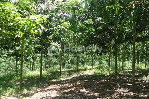 Bán đất cao su hơn 200 hecta tại huyện Đạ Huoai, tỉnh Lâm Đồng