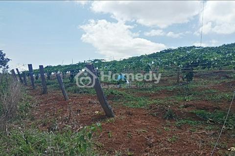 Gia đình cần bán lô đất nông nghiệp ở Đa Sar, Lạc Dương, Lâm Đồng