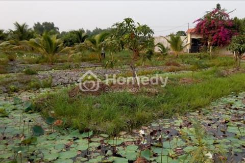 Bán đất làm vườn ở xã Tân Thạnh Đông, diện tích 1.200 m2 (54 x 22), giá 720 triệu, sổ hồng riêng