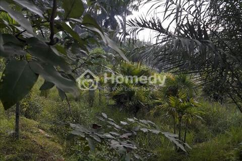 Cần bán gấp đất nông nghiệp xã Tân Thạnh Đông - Củ Chi, diện tích 5.800 m2, giá 2,3 triệu/m2