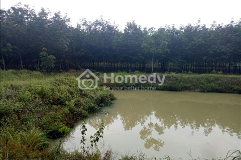 Bán 2 mẫu mốt cao su đang thu hoạch Đồng Tiến, Bình Phước