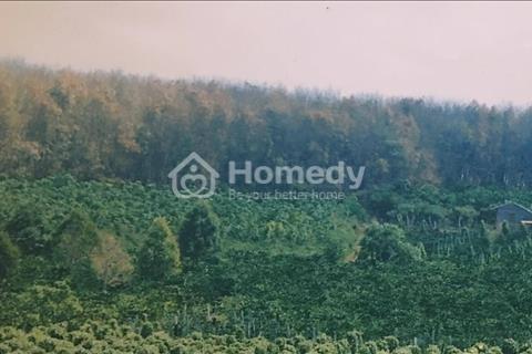Bán trang trại cafe, cao su, hồ tiêu tại huyện Đức Cơ, Gia Lai