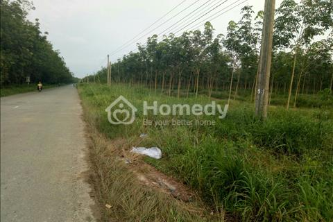 Bán đất đường nhựa Vĩnh Hòa Phú Giáo Phú Giáo Bình Dương