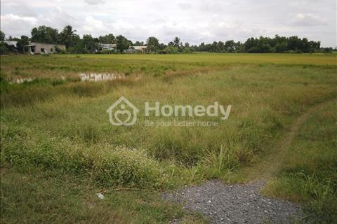 Bán đất ruộng đã được cấp phép lên đất lên vườn 5.500m2 xã Tân Nhựt Bình Chánh