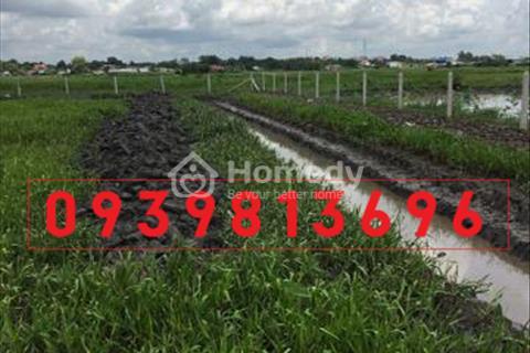 Bán đất nông nghiệp giá rẻ ở Tân Thạnh Đông, dt 1.100m2( 22x50 )/ giá 880tr