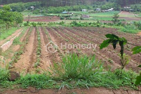 Đất NN  Khe Sanh – P10: 1.000 m2/3,5 tỷ. BĐS Hoàng Thịnh