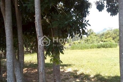 Chính chủ, trang trại bò 2 hecta tại Cam Ranh, Khánh Hoà cần bán gấp giá 990 triệu, có sổ đỏ