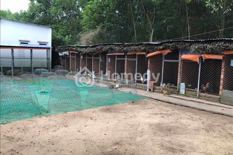Cần sang trang trại gà đá + nhà cố định Nhơn Trạch