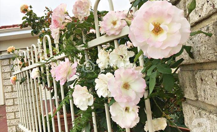 """Mê mẩn với """"ngôi nhà hoa hồng"""" của cặp vợ chồng Việt tại Úc"""