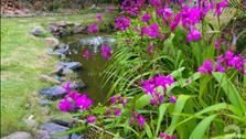 Ngôi nhà vườn cực thơ mộng của nữ giảng viên Hà Nội