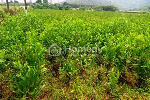 Bán mảnh đất nông nghiệp tại Mỹ Lộc, Cần Giuộc, Long An - diện tích 21x47m - giá 1,25 tỷ