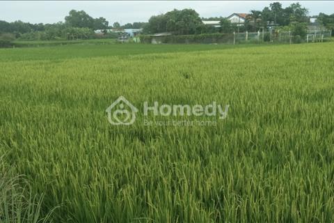 Kẹt tiền Dì Năm cần bán 1638m2 (300m2 thổ cư) Bà Cả, Hưng Long, Bình Chánh
