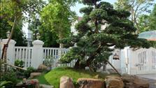 Vườn nhà xanh mát đậm dấu ấn Nhật Bản ngay Hà Nội