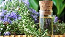 Những loại cây cỏ quen thuộc có thể phòng chống dịch sốt xuất huyết tốt không ngờ